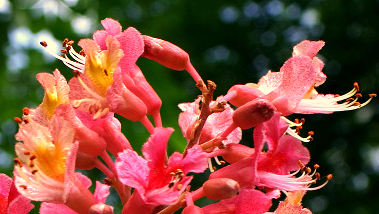 Online Bach Çiçekleri Eğitimi